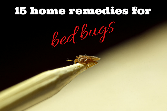 Effective Home Remedies For Bed Bugs Full Guide