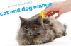 cat and dog mange home remedies