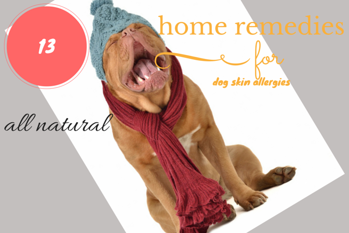 Home remedies for dog skin allergies for Fish allergy home remedy