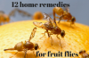 home remedies for fruit flies