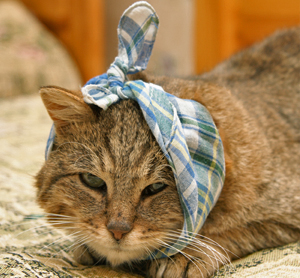 10 Home Remedies for Sick Cats