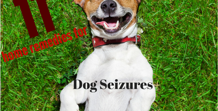 home remedies for dog seizures