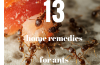 ant home remedies