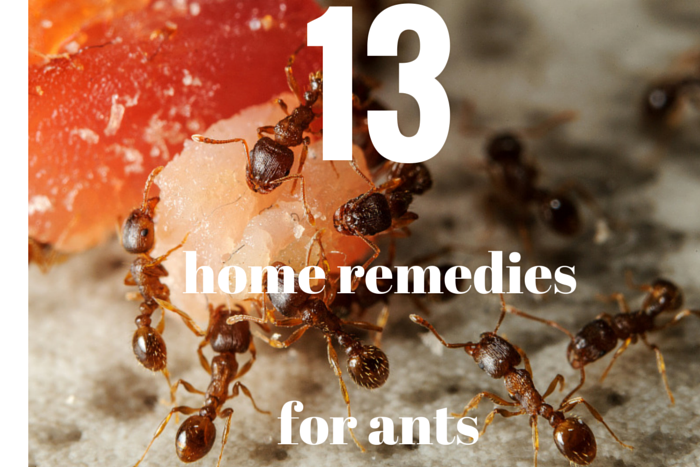 charming Home Remedy For Ants In Kitchen #1: Grandmas Home Remedies