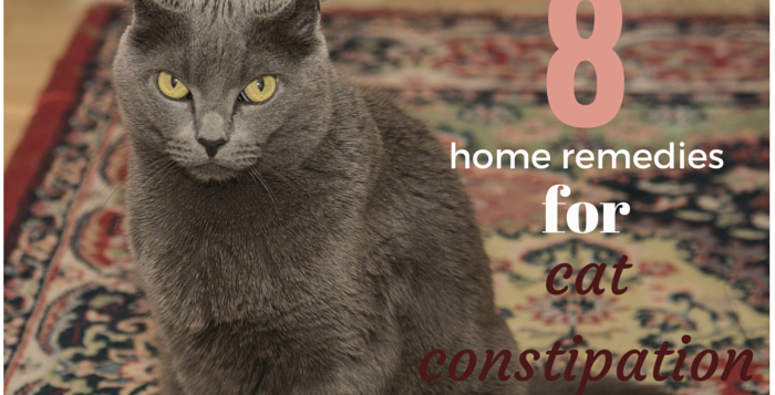 cat constipation home remedies