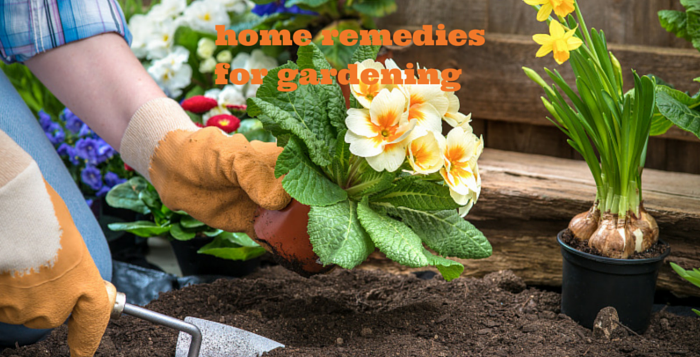gardening home remedies