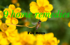 home remedies for bees