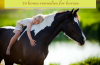 horse home remedies
