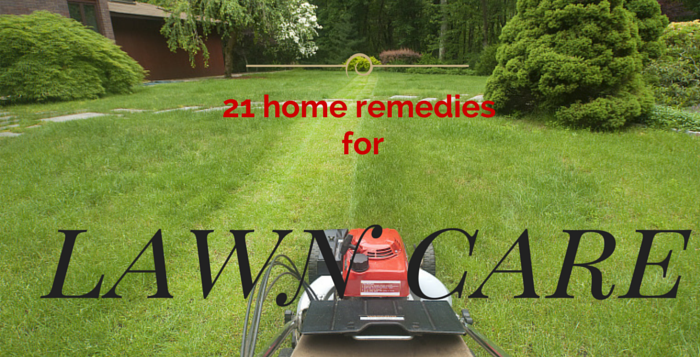 at home remedies for lawn care