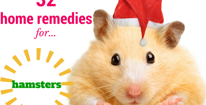 at home remedies for hamsters