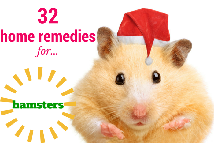 Home Remedies For Hamsters