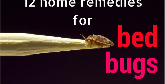 home remedies for getting rid of bed bugs