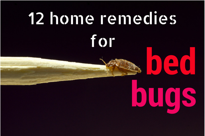 Home Remedies To Kill And Get Rid Of Bed Bugs