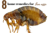 home remedies for getting rid of flea eggs
