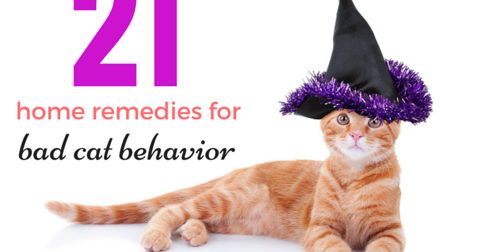 home remedies for bad cats