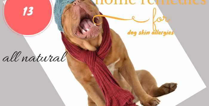 home remedies for dog skin allergies