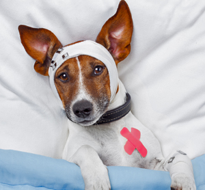 8 Home Remedies for Dog Bone Injuries