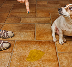 9 Home Remedies for Dog Urine on Furniture