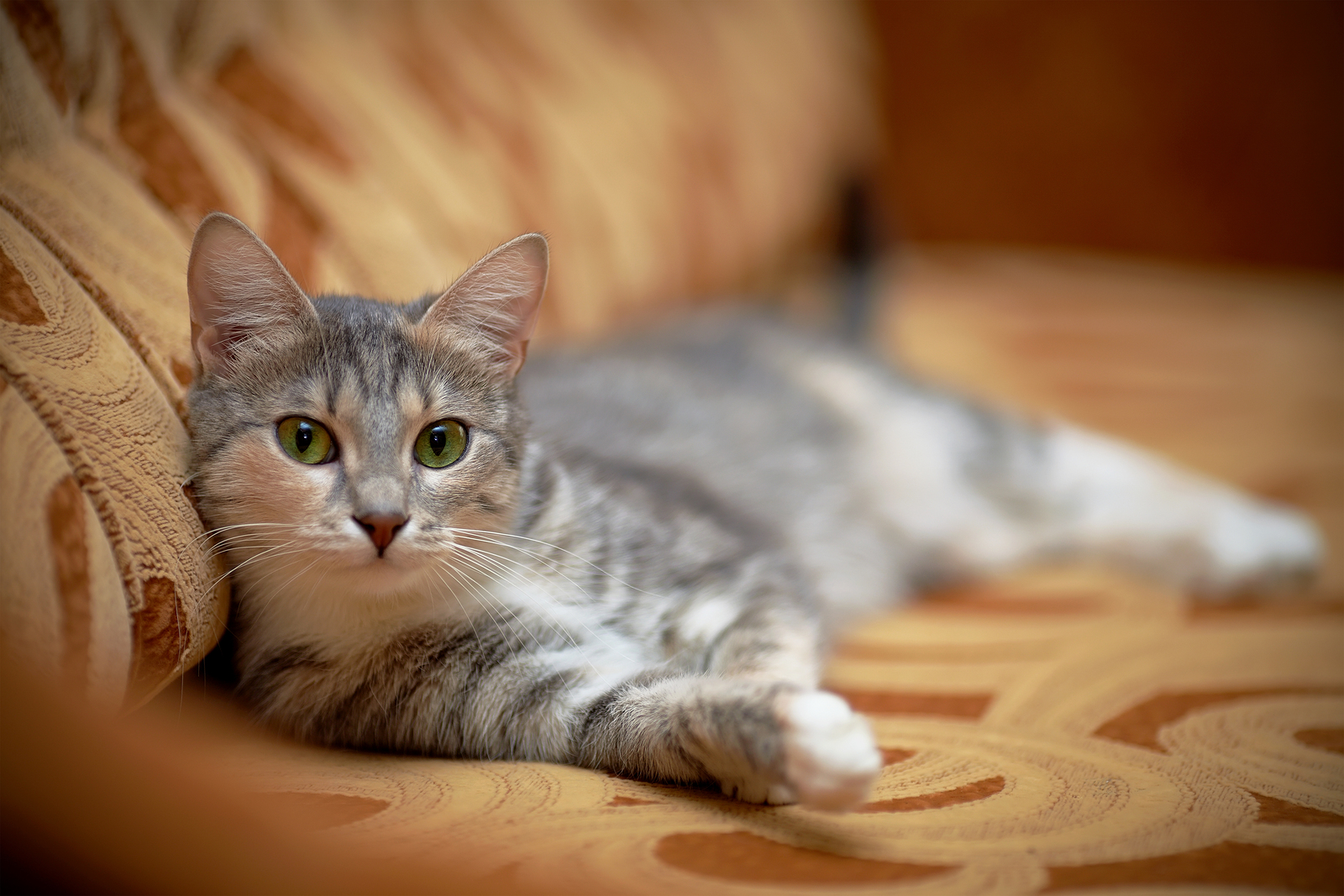 How To Treat Fleas In Cat