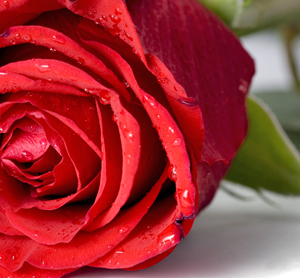 Home Remedies Using Rose Water