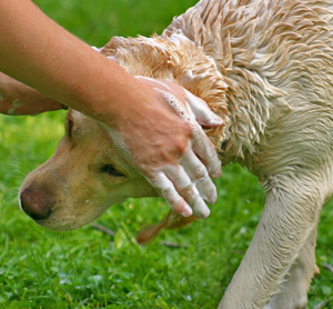 Home Remedies for Body Odor In Pets