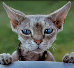 Home Remedies for Cat Manage