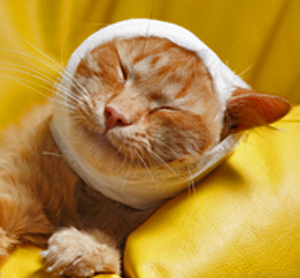 Home Remedies for Crusty Ear In Cats