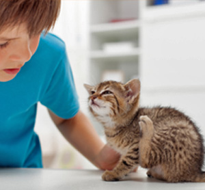 Home Remedies for Fleas In Kittens