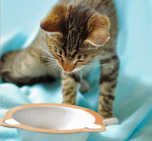 Home Remedies for Natural Cat Diet