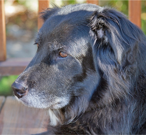 Foods That Worsen Inflammation In Dogs