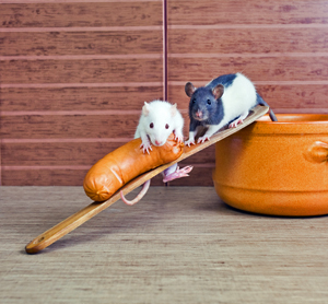Home Remedies to Clean Mice Droppings