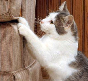 How To Keep Cats From Scratching Leather Furniture Home Remedies