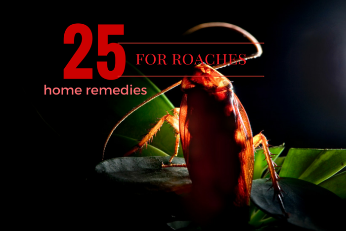 cockroach home remedies